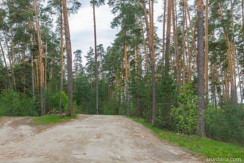 Сосновый бор, Нижегородская область