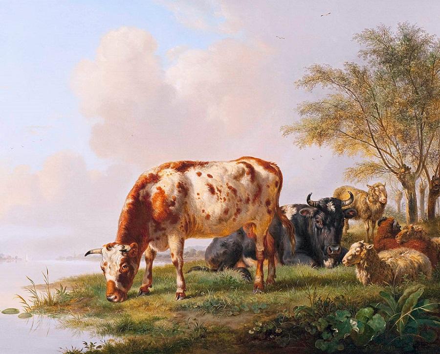 Cows and sheep at the river ban
