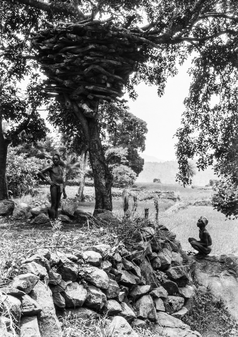 694. Орисса. Двое мужчин возле дровяного склада на дереве