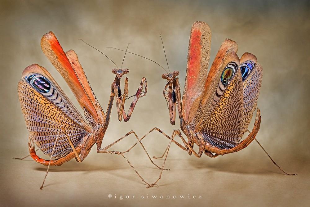 Удивительные макрофотографии Игоря Сивановича