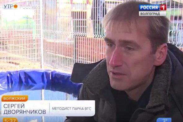 Вести - сюжет про лебедя в парке ВГС