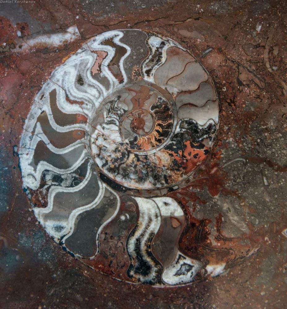 И весьма интересное место — колодцы в каменной пустыне, рядом обитают их владельцы — берберы в