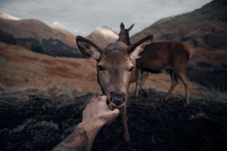 Удивительная близость с природой: дикие животные Шотландии с очень близкого расстояния (16 фото)