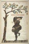 illustrations-anciennes-toutes-en-plumes-400-ans-10-711x1080.jpg