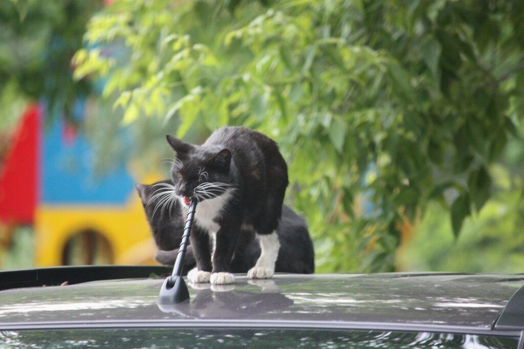 Котикипопятнинцам-5.jpg