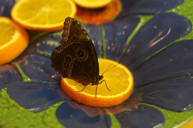 Бабочки и хищные растения, Саратов, 17 марта 2017 года