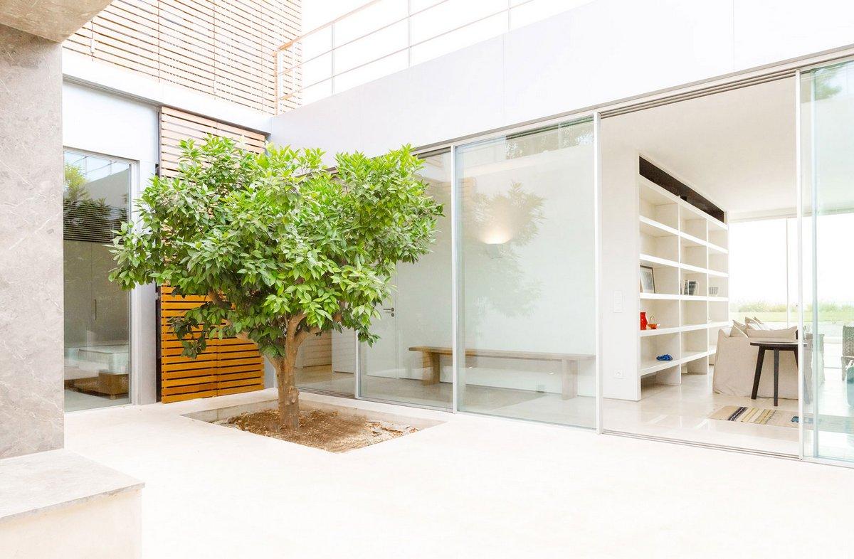 Дерево в частном доме
