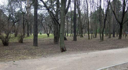 11_2 газон 2.JPG