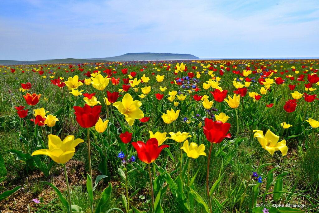 Тюльпанные поля на краю земли
