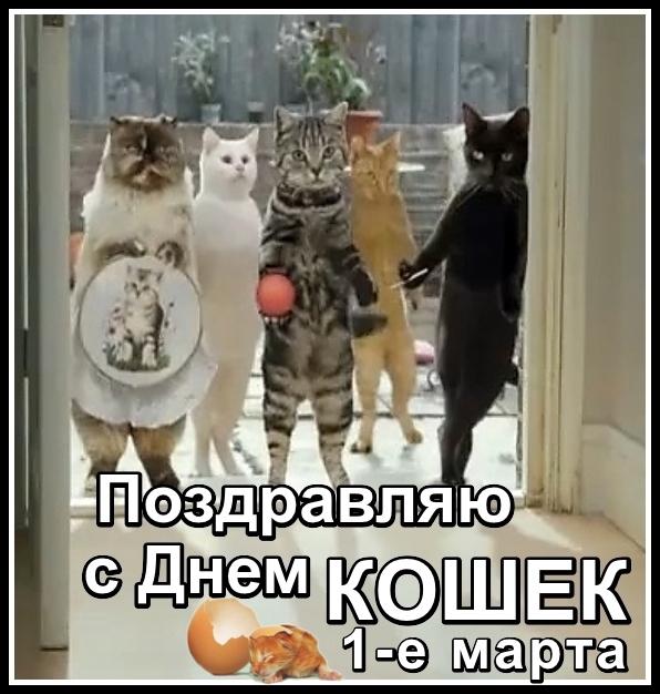 я-праздник-кошки ИN.jpg