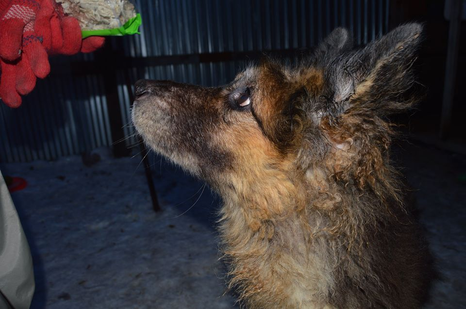 Гретта собака из приюта догпорта