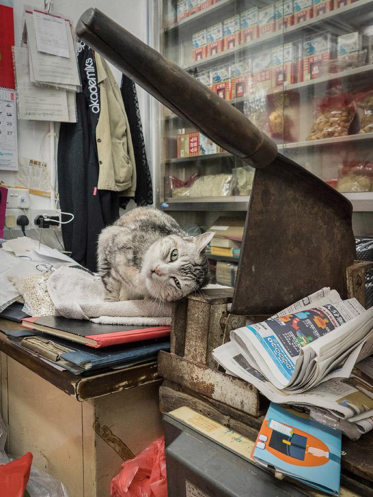 Тайная жизнь домашних животных в магазинах Гонконга (15 фото)