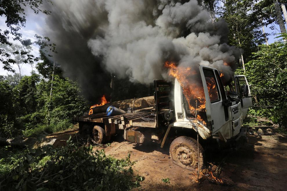 18. Этого лесоруба совсем «без штанов» оставили. (Фото Reuters | Lunae Parracho):