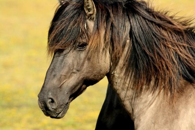 © Pixabay  Эта история произошла нашотландской ферме. Фиона Бойд (Fiona Boyd), пытаясь помочь