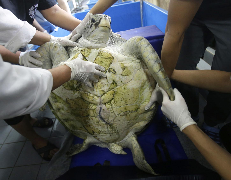 Ветеринары предполагают, что рептилия полностью выздоровеет примерно через месяц, правда, потом ее о