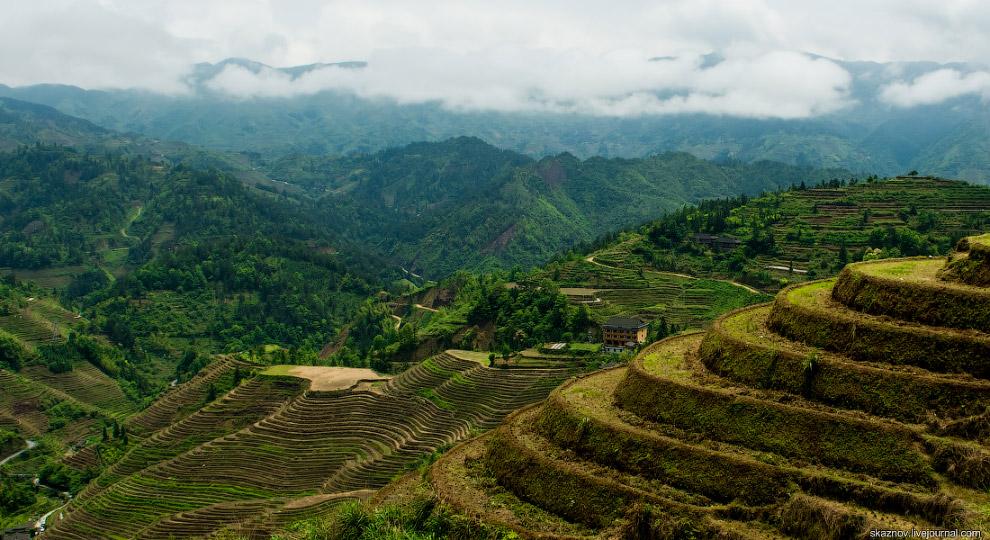 24. Вся жизнь в деревнях основана вокруг риса. Никаких других перспектив.