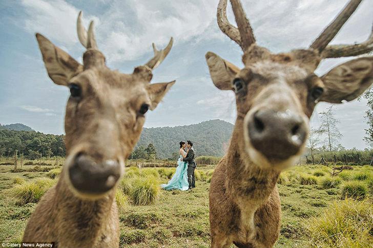 Эту милую фотографию опубликовало Международное общество профессиональных свадебных фотографов.