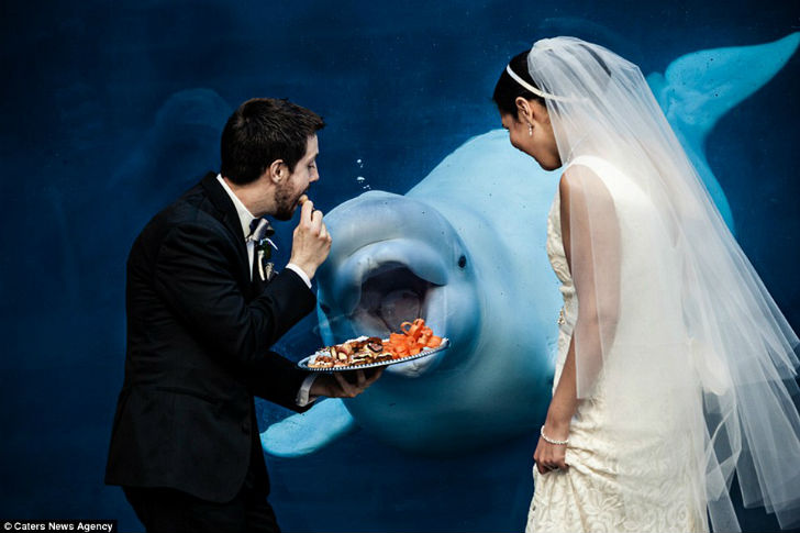 Кажется, белухе понравилось свадебное угощение.