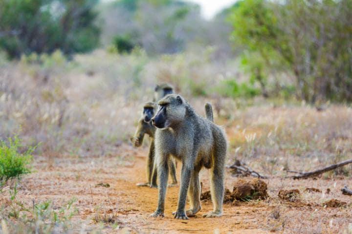 Охотничий резерват Селус, Танзания. Под угрозой с 2014 года.