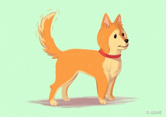 Собака бросает некий вызов вашему авторитету, поскольку считает сейчас себя главной вэтой ситуации.