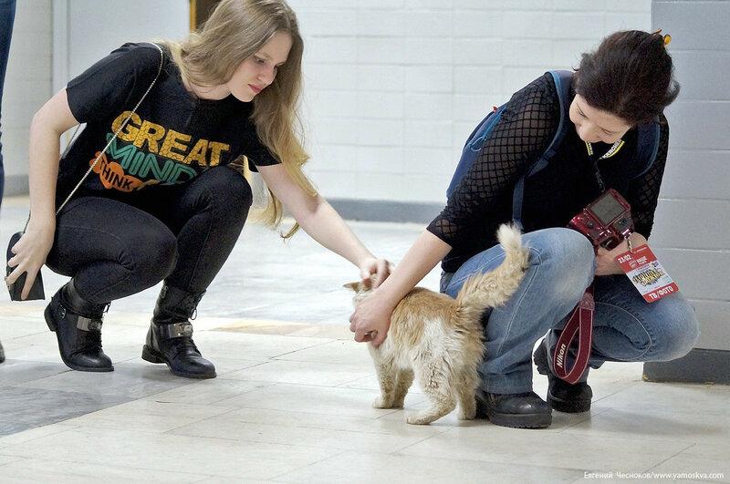 Олимпийский. котик. 23.02.17.03..jpg