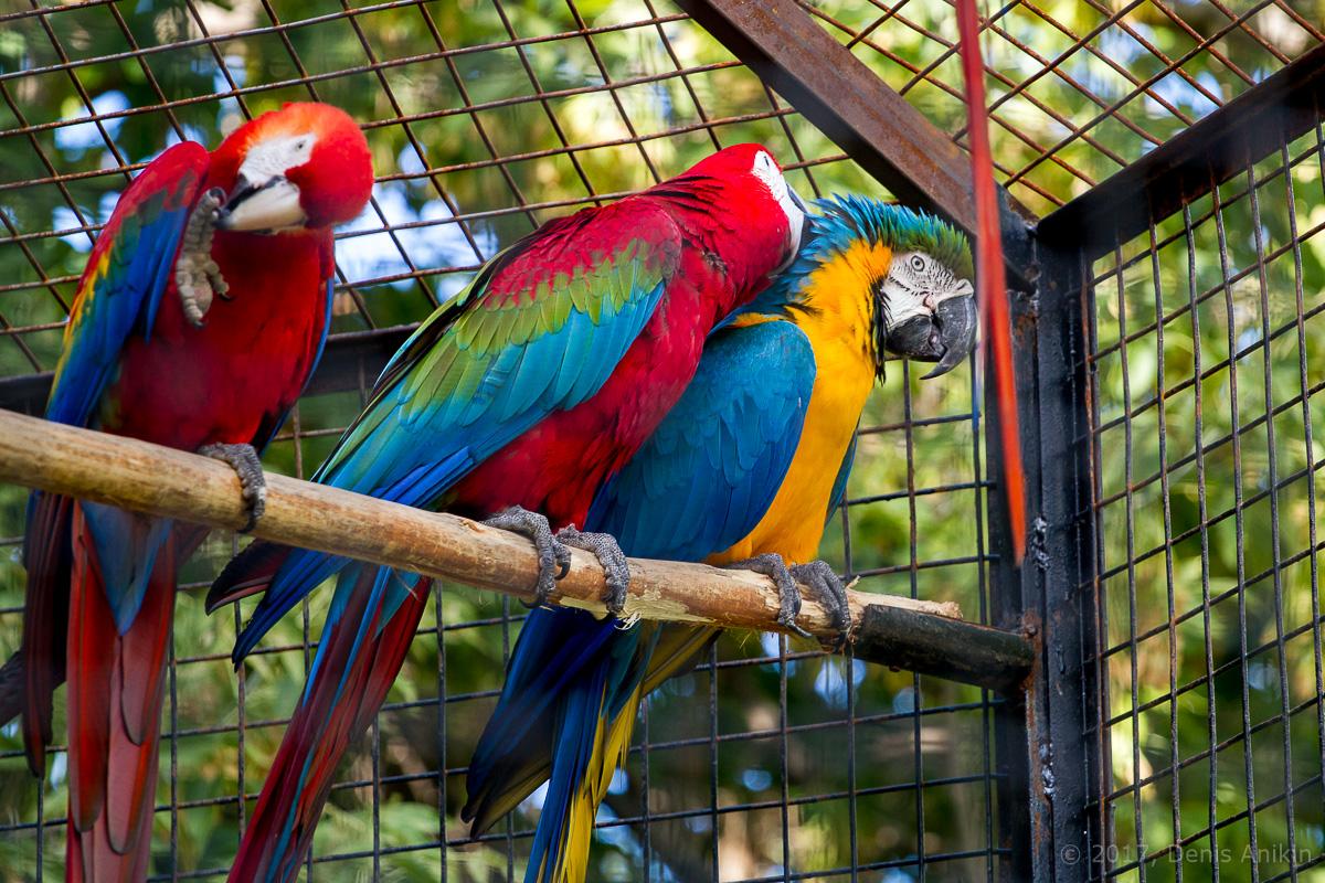 попугай ара фото 1