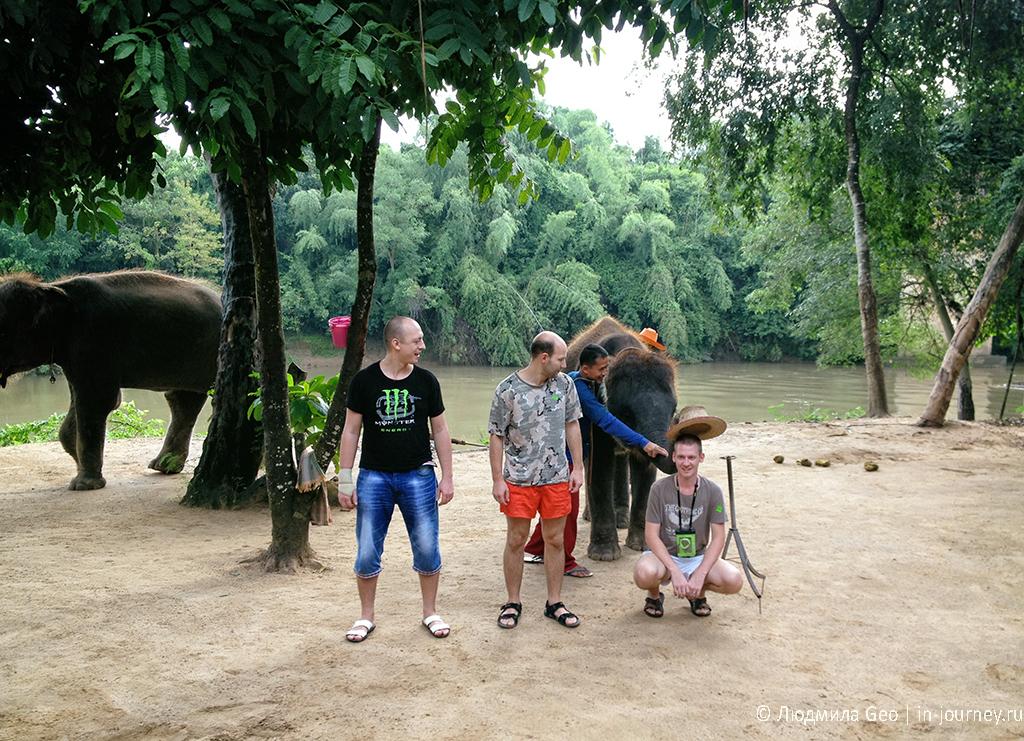 слоновье представление фото
