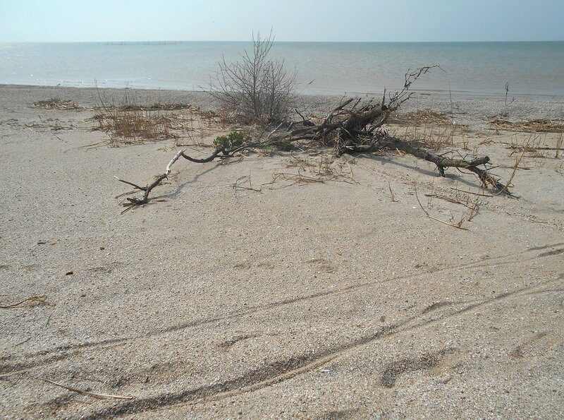 У моря... День апрельский ... DSCN1742.JPG