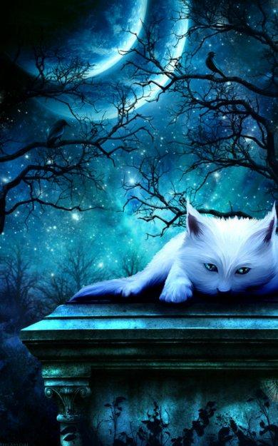 ночь-кот-3.jpg