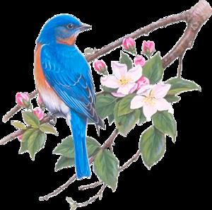 птички сине-голубые