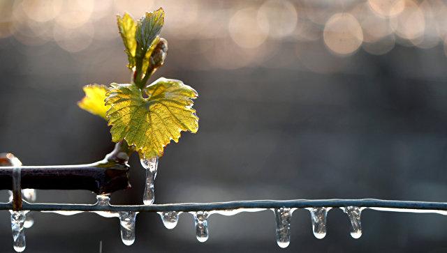 ВоФранции резко сократилось производство вина