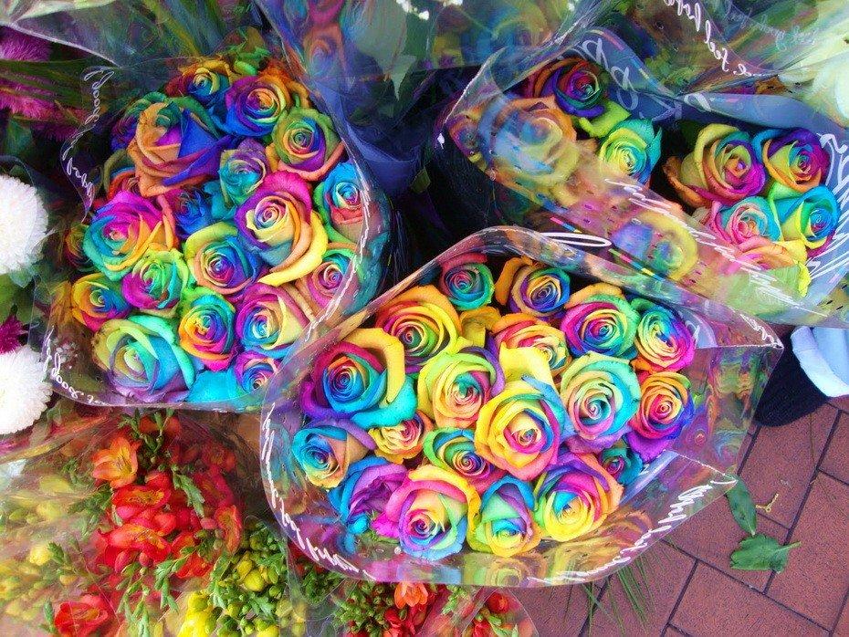 Откуда взялись радужные розы (1 фото)