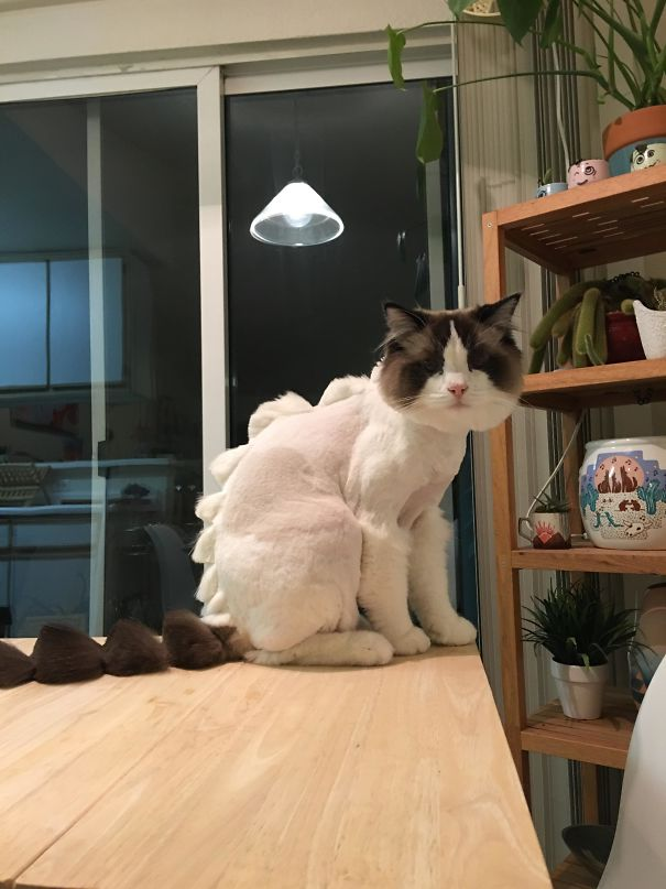 «Вот что происходит, когда отправляешь бойфренда отвезти кота на стрижку».