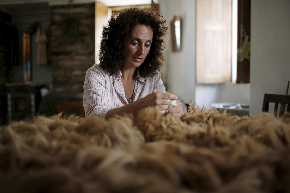 21. Так выглядит, пожалуй, лучшая шерсть в мире — шерсть альпак. (Фото Rafael Marchante | Reute