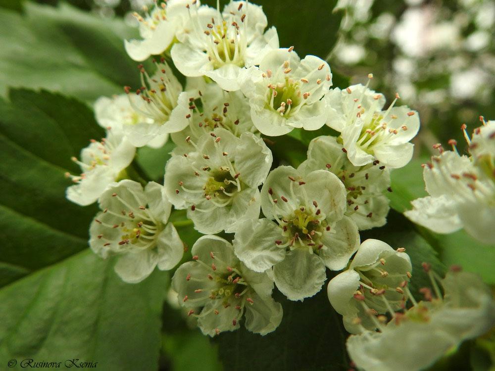 Цветы Битцевского леса