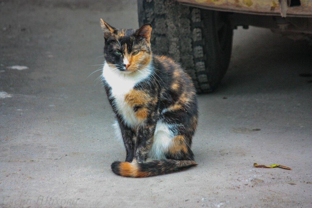 Кошка-2.jpg