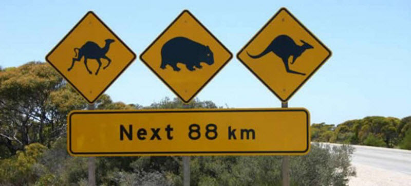 Внезапные дорожные знаки со всего мира