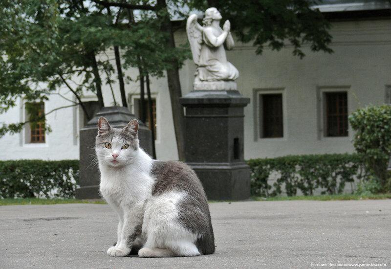 76. Новодевичий. Кошка. 05.09.07.01..jpg