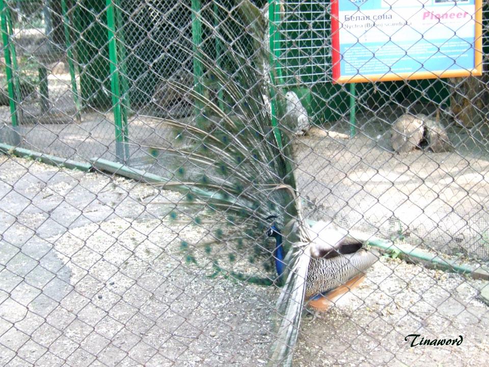 зоопарк-19.jpg