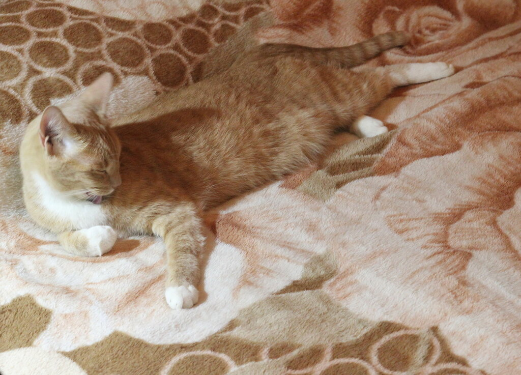 """М"" - Маскипрвка. Васька на одеяле"