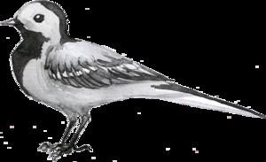 птицы серые