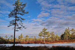 Оттенки весеннего леса