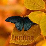 Аватарки Осень