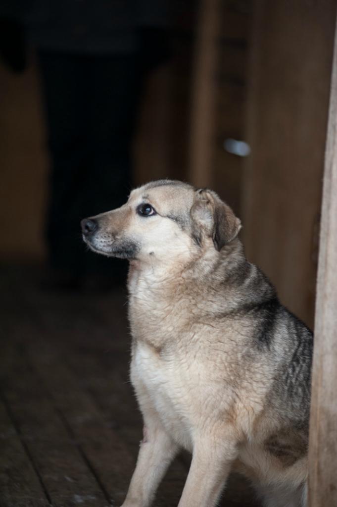 Буся собака из приюта догпорта