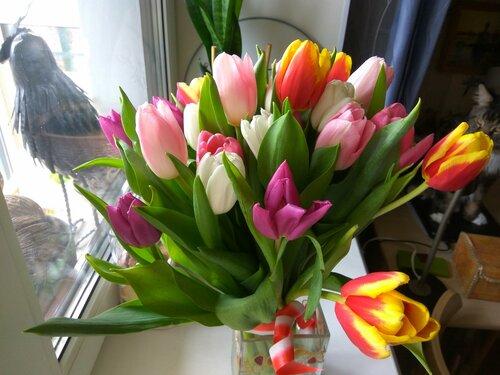 Тюльпаны КиГ.jpg