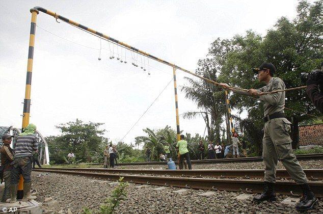 Борьба с зайцами в Индонезии