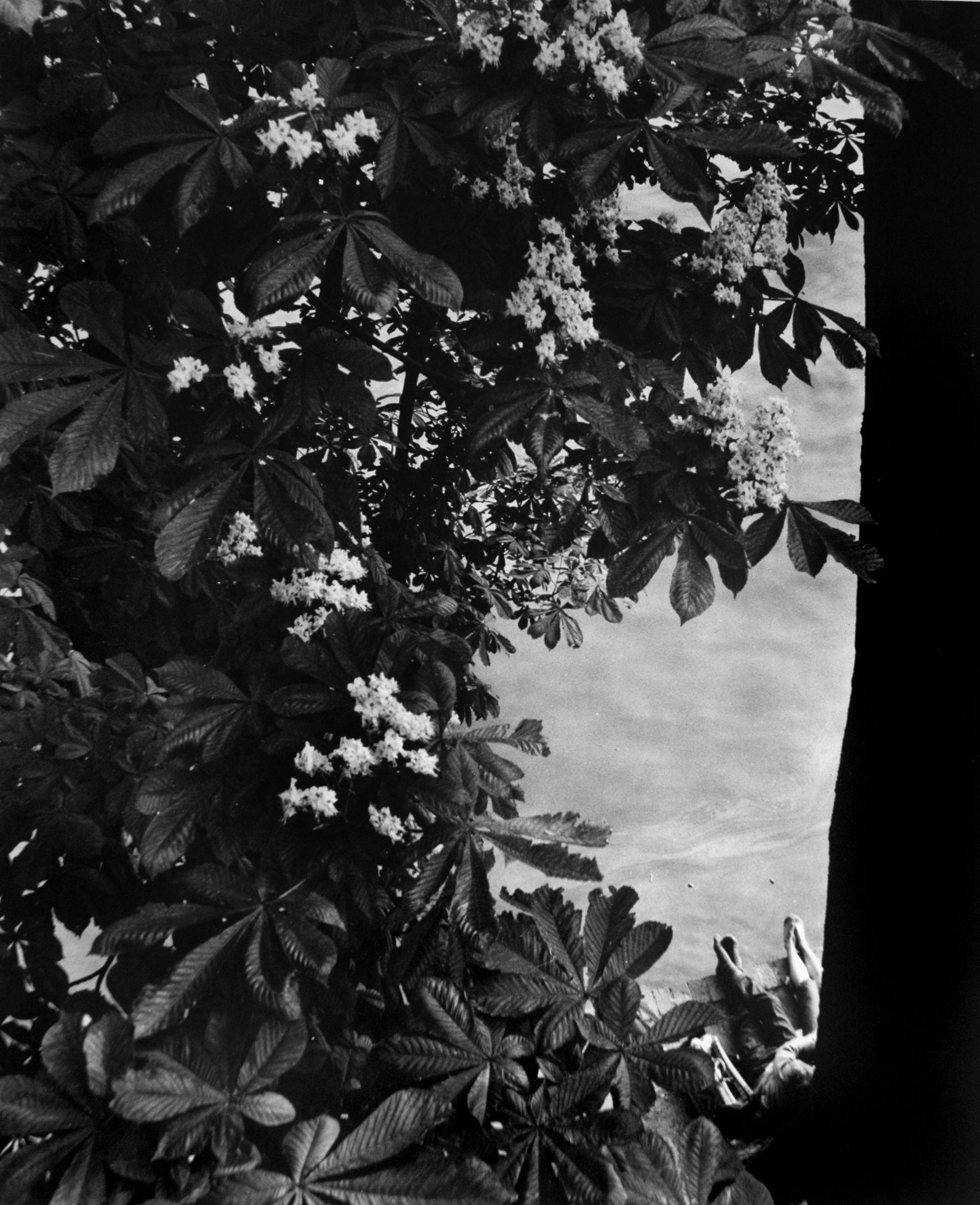 1952. Набережная Тюильри, Париж