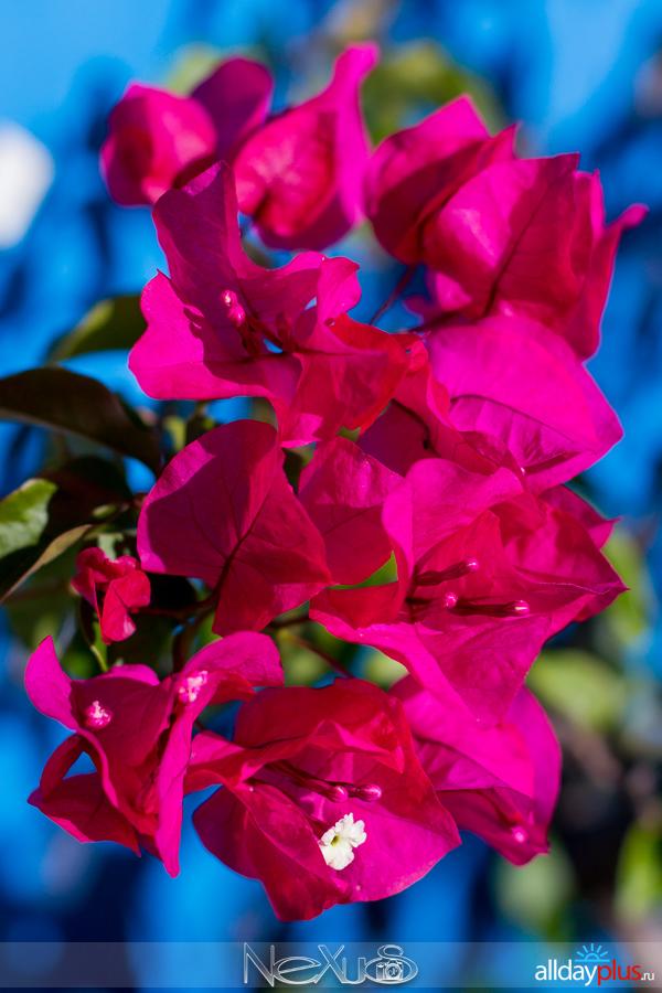 Я люблю все цветы, выпуск #222 | С Днём Рождения, Kaggy !