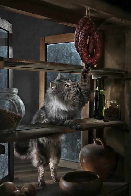 кошки-кошки-света павловская-1.jpg