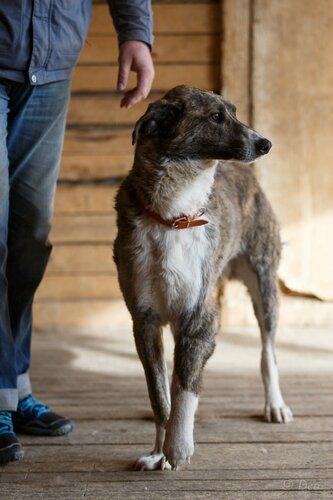 Вашингтон, собака из приюта догпорта
